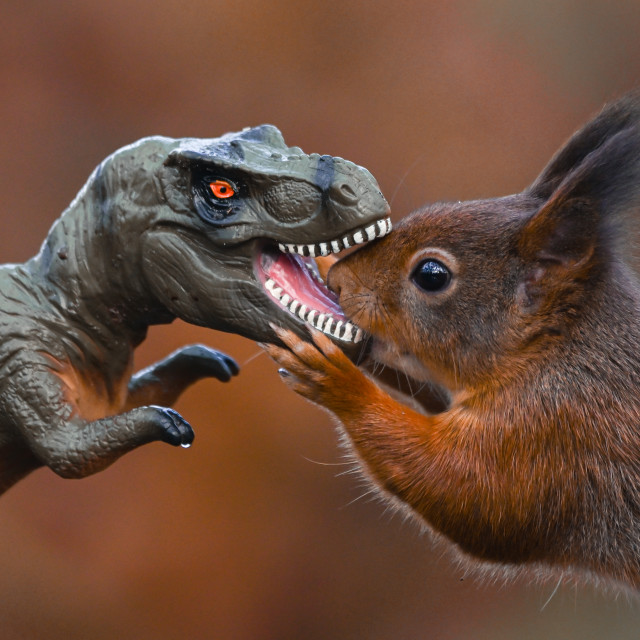 """Dinosaur VS Red Squirrel Round 7"" stock image"