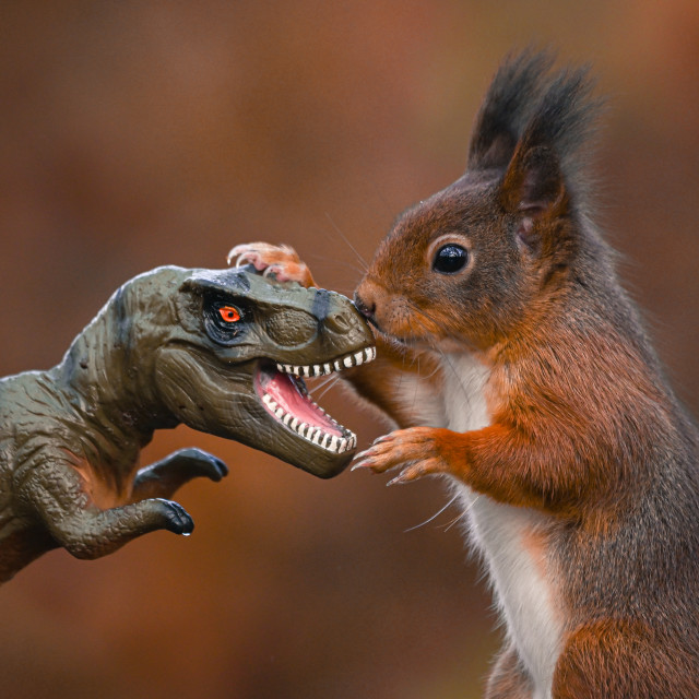 """Dinosaur VS Red Squirrel Round 8"" stock image"