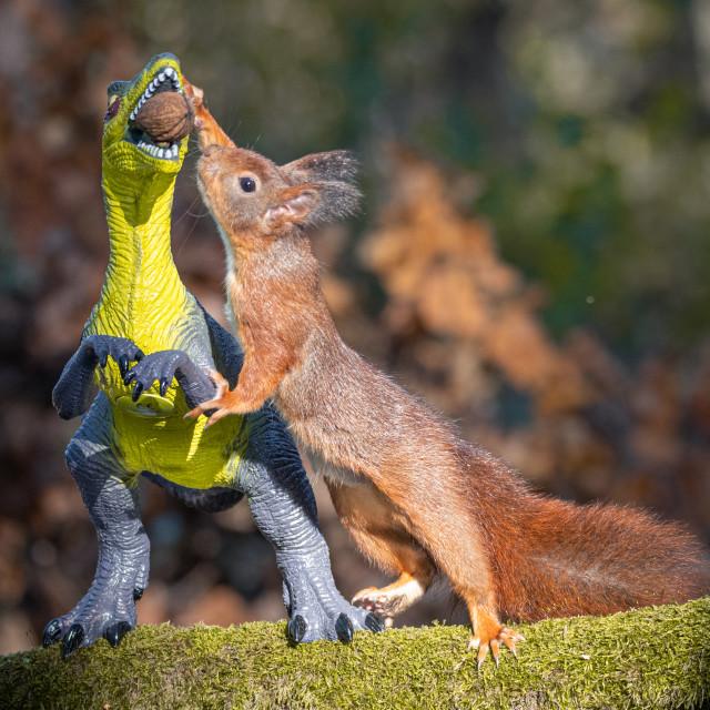 """Dinosaur VS Red Squirrel Round 9"" stock image"