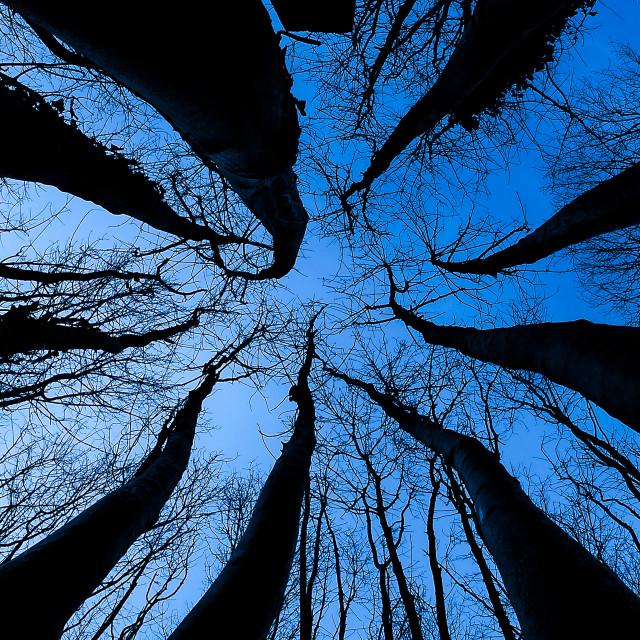 """""""Tree Climb"""" stock image"""