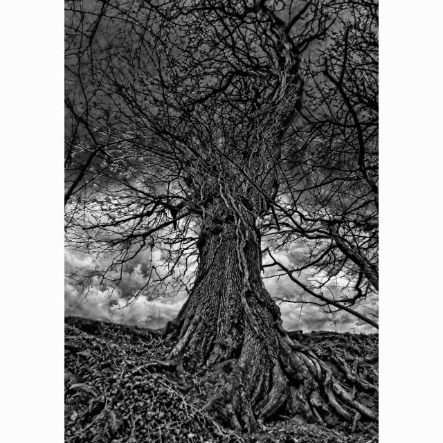 """Mystical Tree"" stock image"