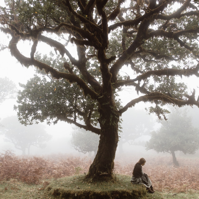 """""""Woman Sitting Under Fanal Tree in Madeira Fog"""" stock image"""