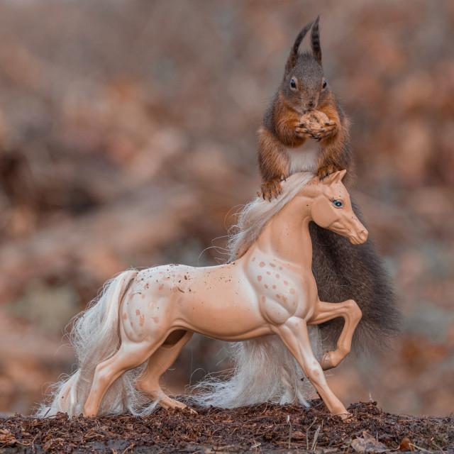 """""""Squirrel Rider"""" stock image"""