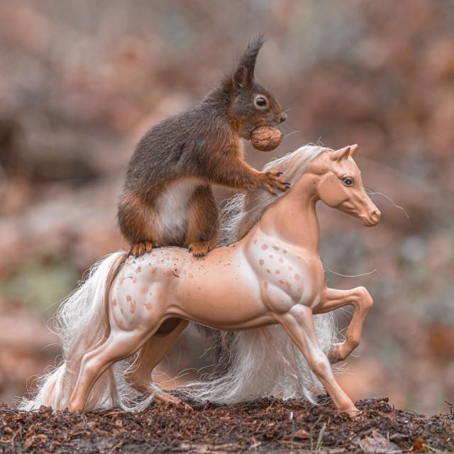 """""""Squirrel Rider 2"""" stock image"""
