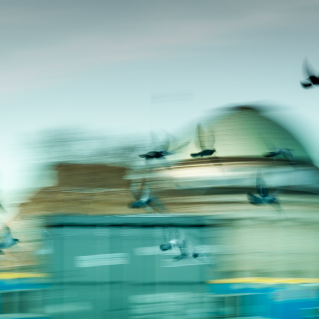 """""""""""Light As A Feather"""" - Motion Blur of birds flying in city"""" stock image"""