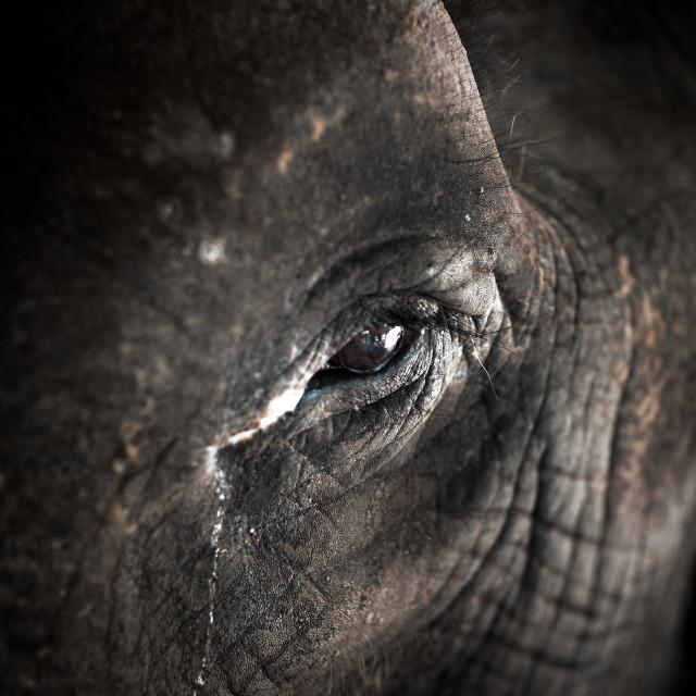 """Elephant Eye"" stock image"