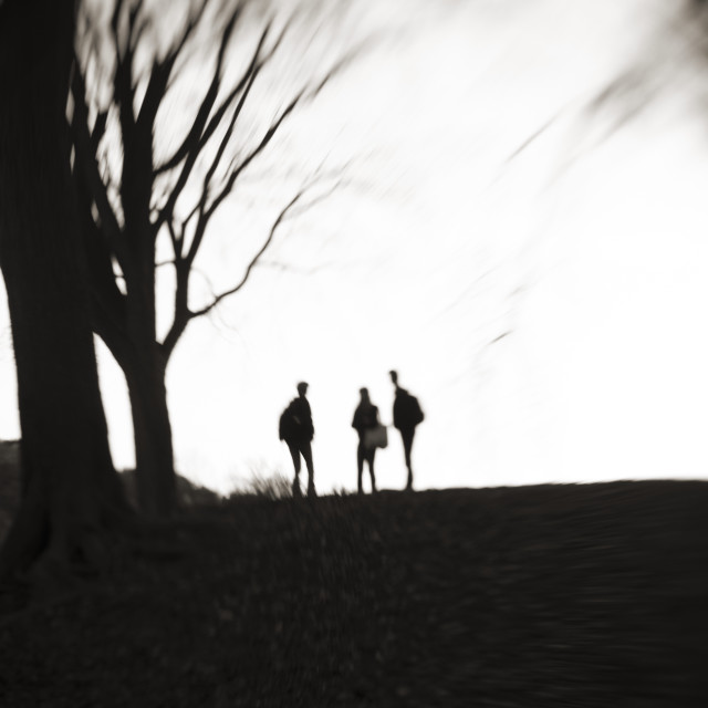 """""""Silhouettes in Prospect Park, Brooklyn"""" stock image"""