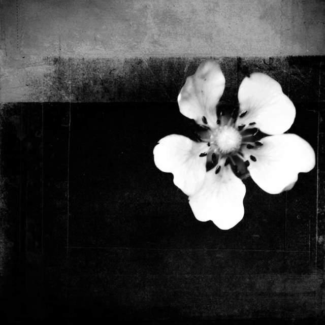 """Lone flower."" stock image"