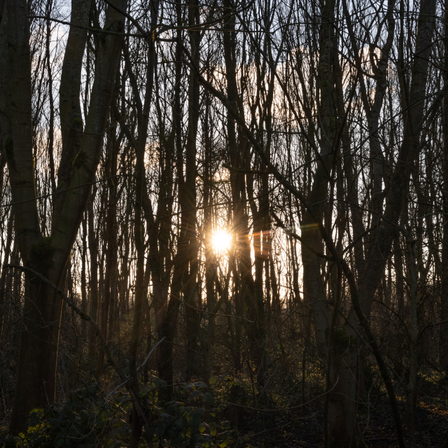 """My Manchester - Chorlton Sunset Through Trees"" stock image"