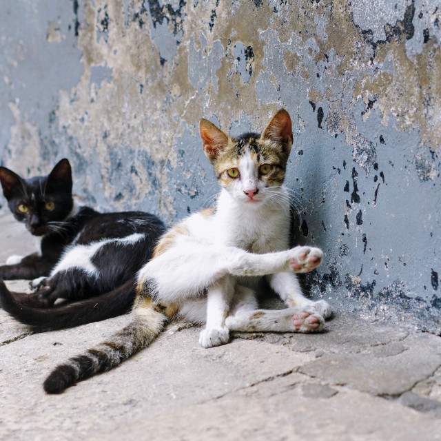 """""""Stone Town Cats"""" stock image"""
