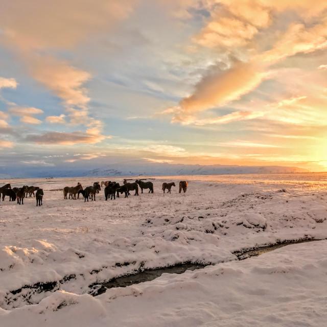 """""""Icelandic Sunrise"""" stock image"""