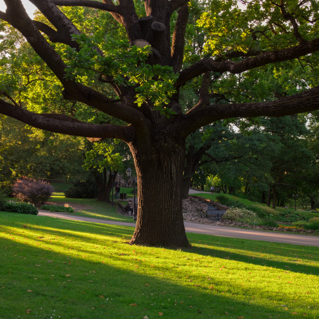 """Majestic tree in Riga, Latvia"" stock image"