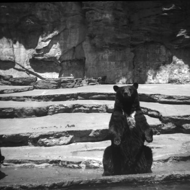 """Vintage Bear"" stock image"