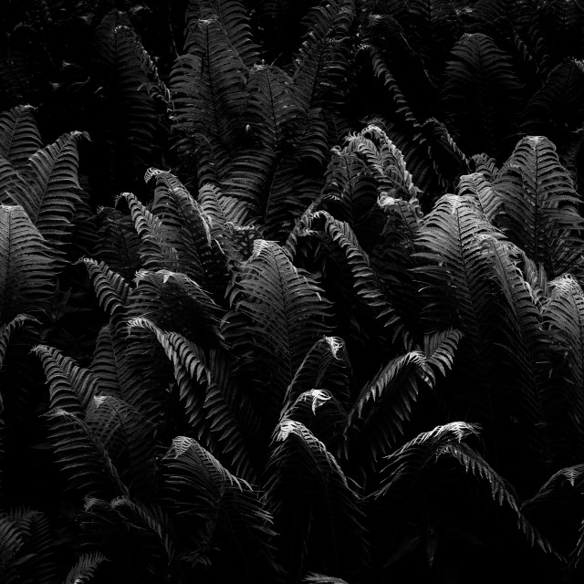 """""""Fern carpet in black and white"""" stock image"""