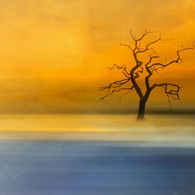 """Skeletal Tree at Sunset"" stock image"