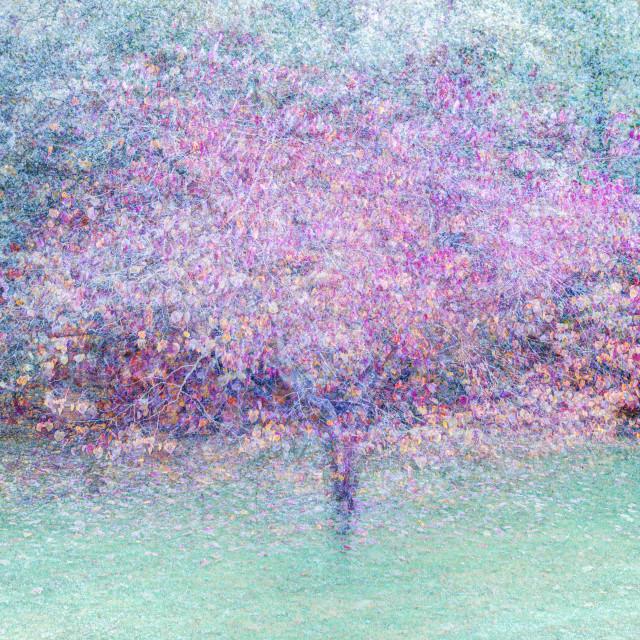 """Multi-coloured Tree"" stock image"