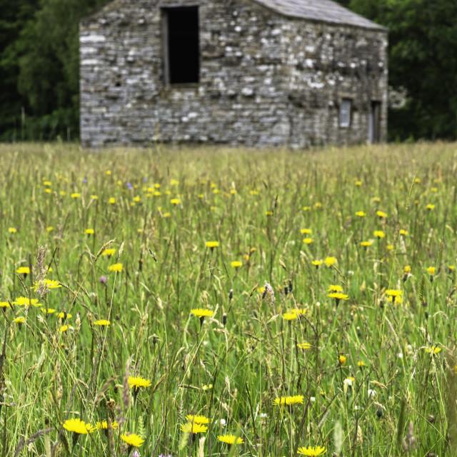 """Swaledale Meadow"" stock image"