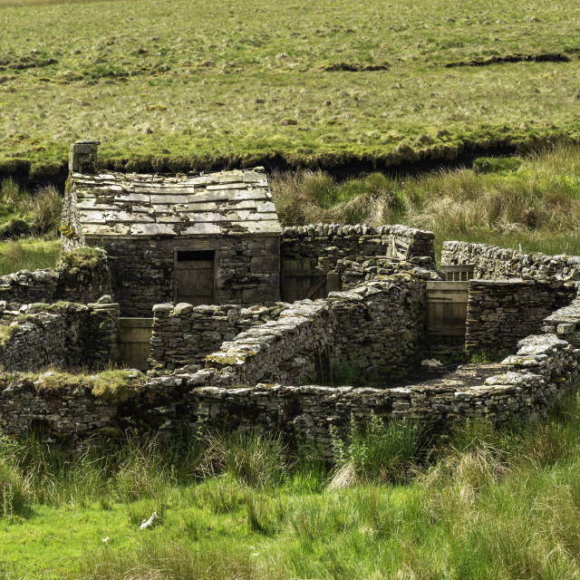 """""""Sheep fold in Upper Swaledale"""" stock image"""