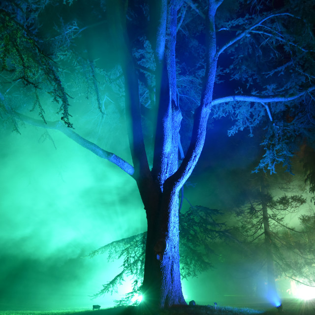 """""""Nocturnal Endeavours IV"""" stock image"""