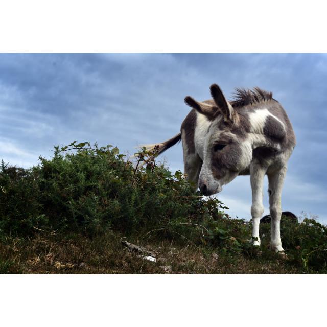 """Donkey II"" stock image"