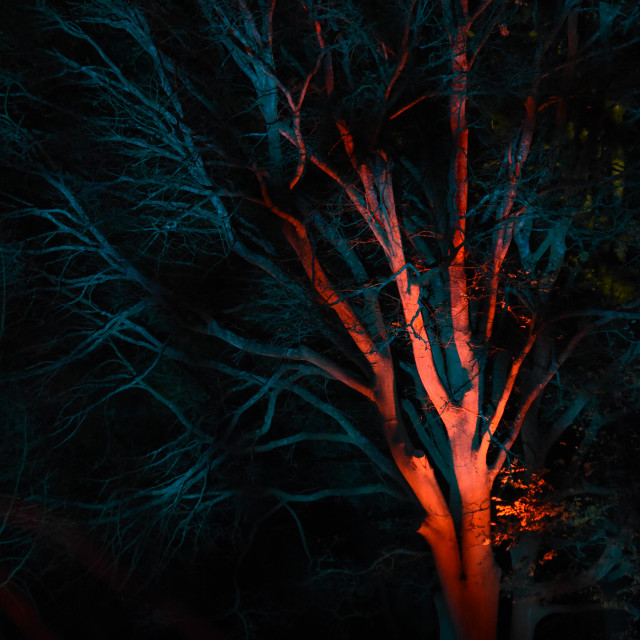 """""""Nocturnal Endeavours XII"""" stock image"""