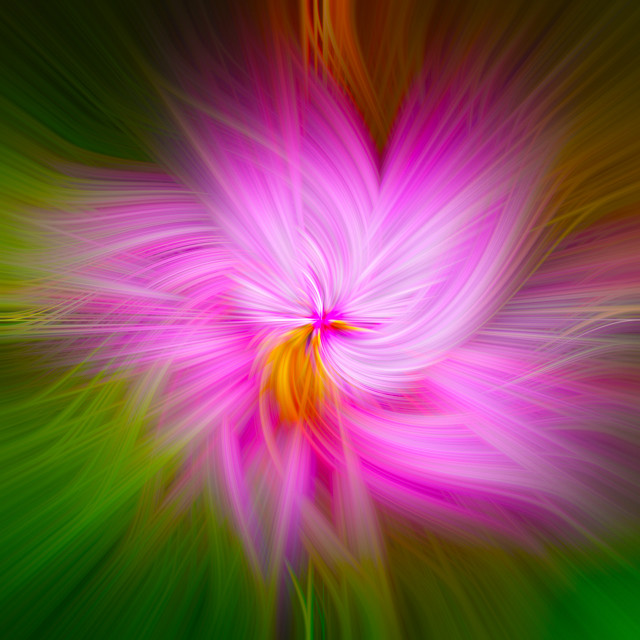 """Flower Transformation 2"" stock image"