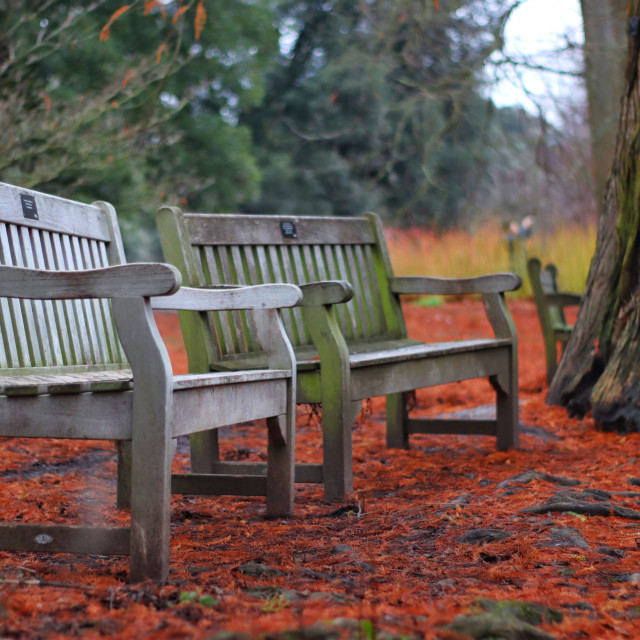 """""""Twin benches"""" stock image"""