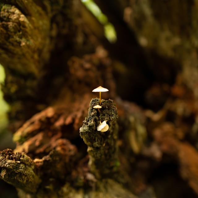 """Tiny Mushroom"" stock image"