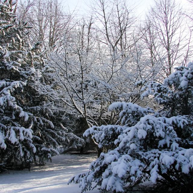 """Snowy Scene"" stock image"