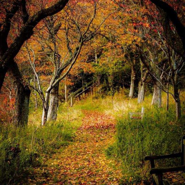 """An autumn's walk"" stock image"