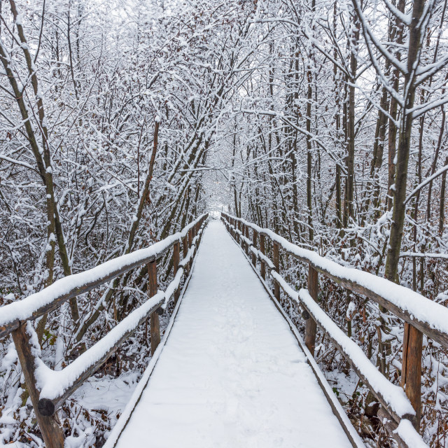 """""""Wooden walkway through the snowy forest on a winter day"""" stock image"""