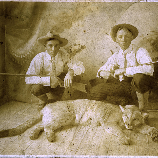 """""""Very old shot of two hunters and a Cougar Carcass"""" stock image"""