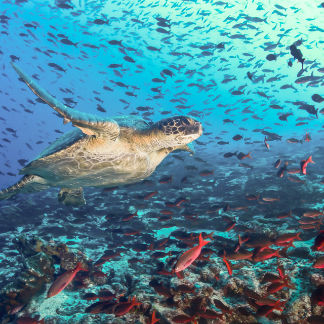 """""""Turtle and tons of fish"""" stock image"""