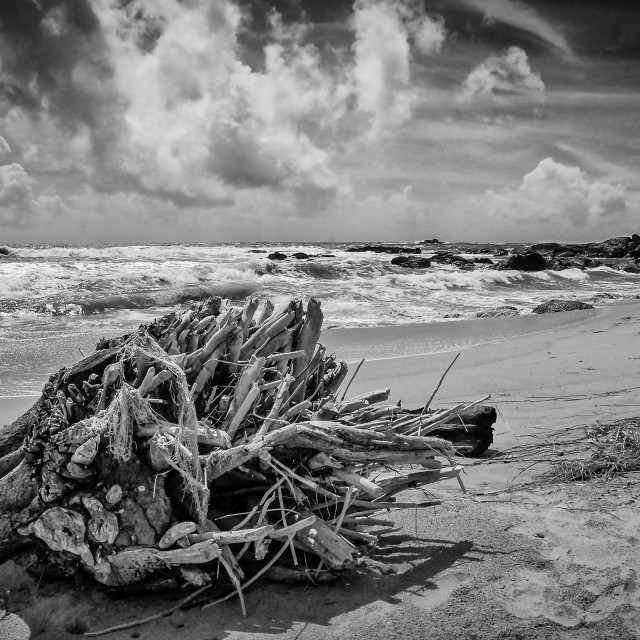 """Sri Lanka, Bentota beach drift wood"" stock image"