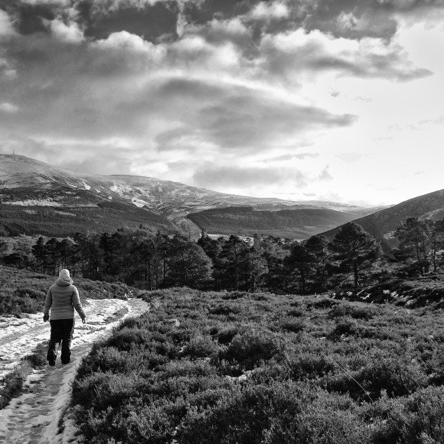 """""""Walker in the Cairngorms National Park"""" stock image"""