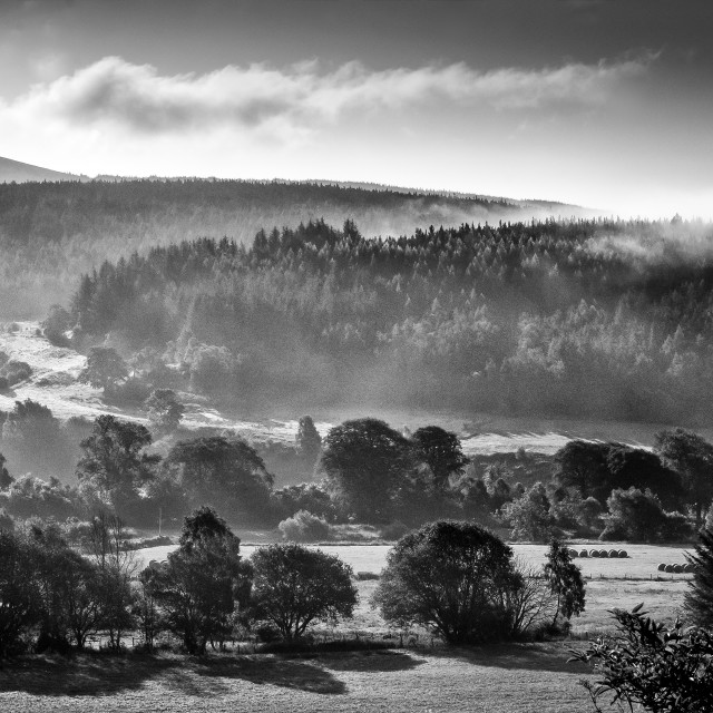 """""""Mist in the Spey Valley, Morayshire"""" stock image"""