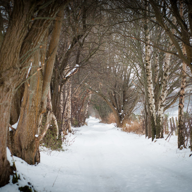 """""""Snowy path through the trees at Rothes, Speyside."""" stock image"""