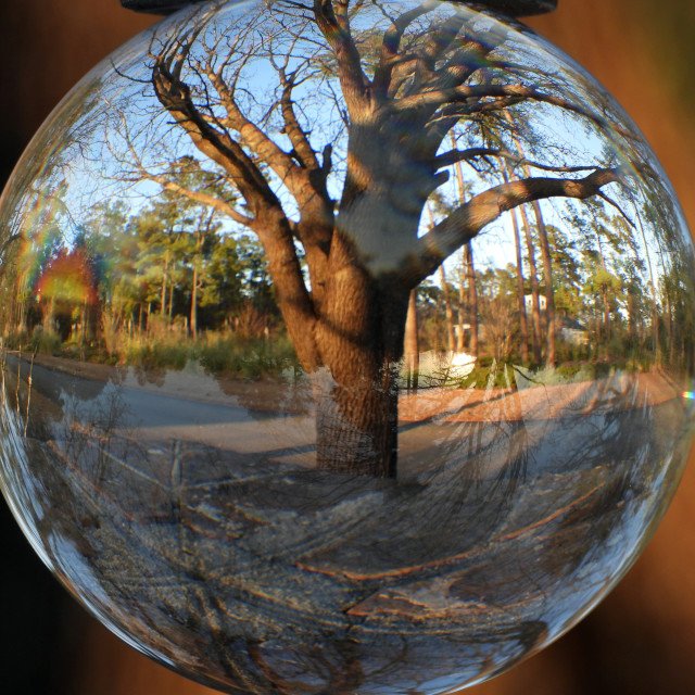 """""""Crystal Ball and Lone Tree"""" stock image"""