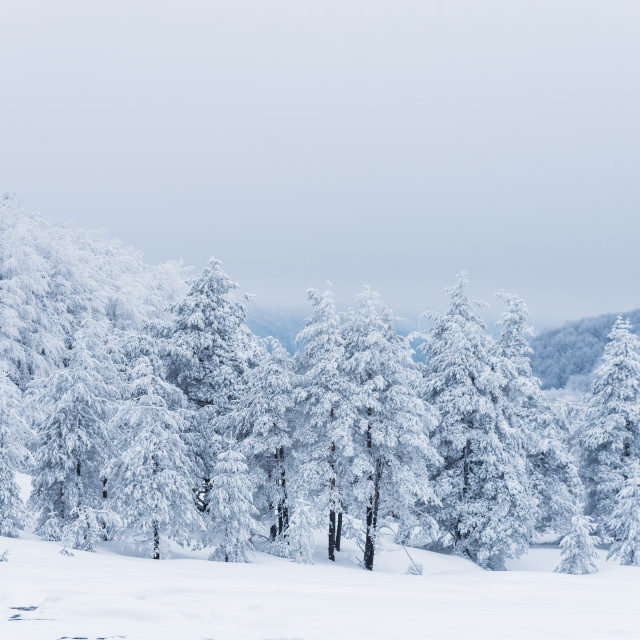 """""""Winter landscape of the mountain."""" stock image"""