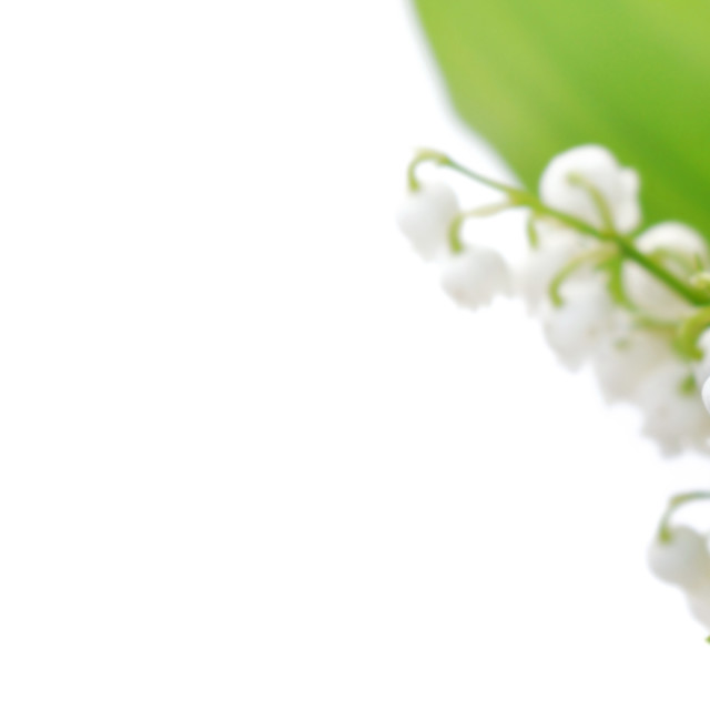 """""""bouquet of freshness lily of the valley blooming on white background in panoramic"""" stock image"""
