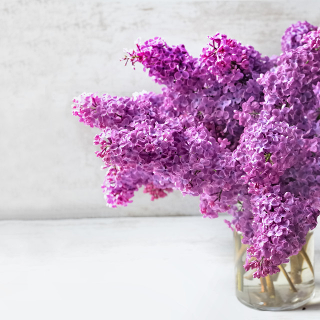 """""""beautiful bouquet of purple lilac on a glass jar ion white table"""" stock image"""