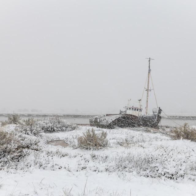 """""""Snow on the saltmarsh"""" stock image"""