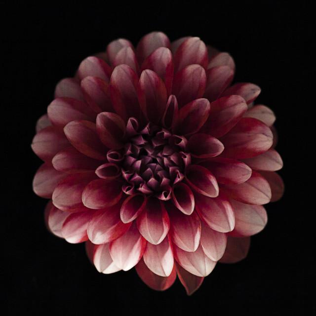 """Blooming flower."" stock image"