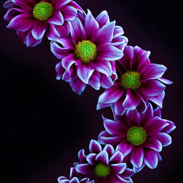 """Flower creating shape."" stock image"