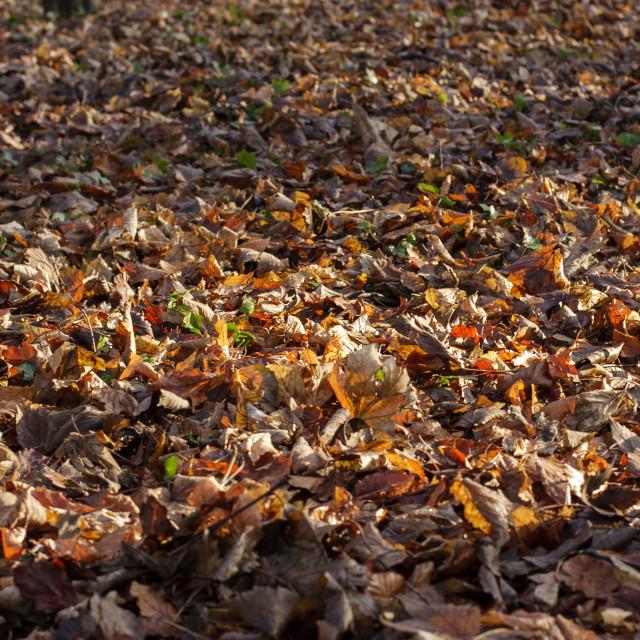 """Sunshine on leaves"" stock image"