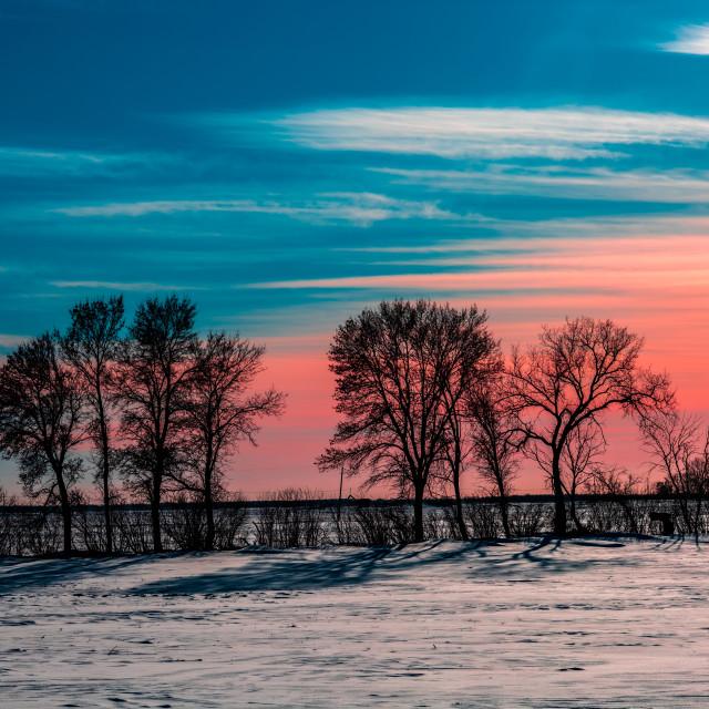 """Tree Line over Pastel Sky"" stock image"