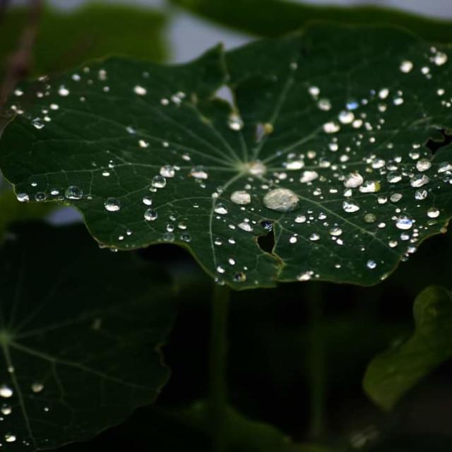 """Dew drops"" stock image"