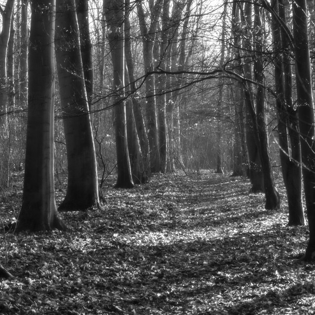 """""""Woods Anglesey Abbey"""" stock image"""