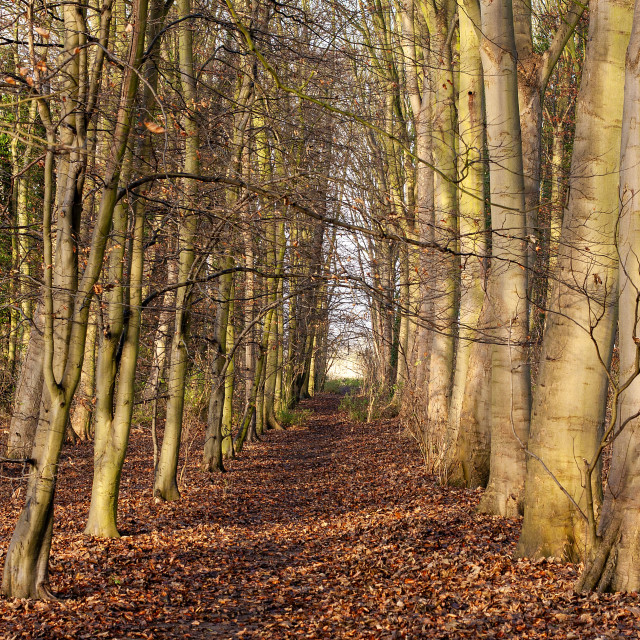 """""""Anglesey Abbey Quy Cambridgeshire"""" stock image"""