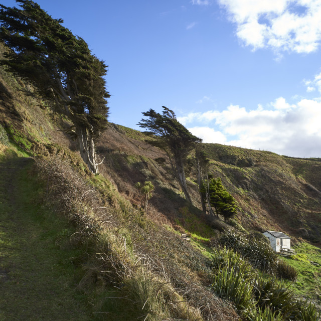 """""""Footpath up the hills"""" stock image"""